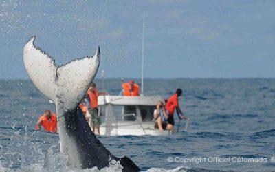 Tens una cita amb les balenes a l'Hotel Solidari Mangily