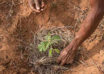 Micro-Reserva d'Endemismes del Sud-oest de Madagascar